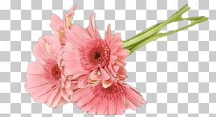Transvaal Daisy Cut Flowers Floral Design Rose PNG