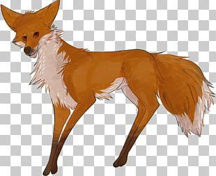 Red Fox Deer Fur Fox News Snout PNG