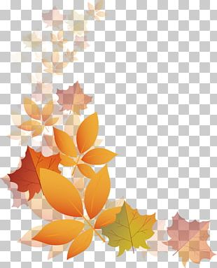 Autumn Transparency And Translucency PNG
