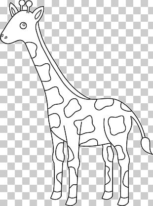 Giraffe Drawing Black And White PNG