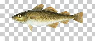 Atlantic Cod Alaska Pollock Haddock PNG