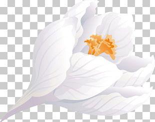 Flowering Plant Petal Flowering Plant PNG