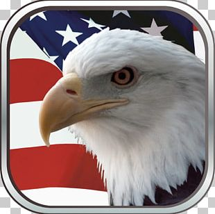 Bald Eagle Flag Of The United States Independence Day PNG