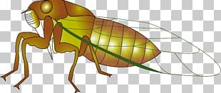 Insect Cicadas Ant PNG
