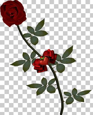 Stock Photography Rose Fotosearch PNG