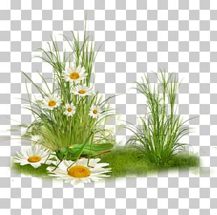 Grass Plant Tree PNG