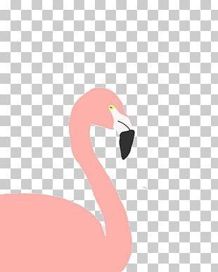 Flamingo Bird PNG