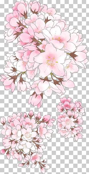 National Cherry Blossom Festival Drawing PNG