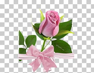 Rose Yellow Pink Color Flower PNG