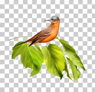 Bird Feather Parrot Beak PNG