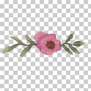 Centifolia Roses Saint George's Day Gift Paper Book PNG