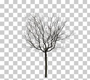 Twig Animation Computer Graphics Tree PNG