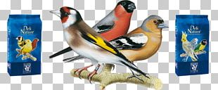 Delicatessen Bird Atlantic Canary Parrot Food PNG