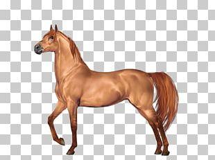 Mustang Morgan Horse Stallion Gypsy Horse Foal PNG