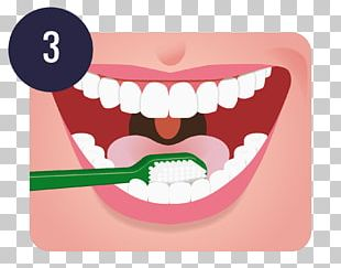 Tooth Brushing Dentistry Oral Hygiene Teeth Cleaning PNG