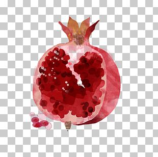 Watercolor Painting Drawing Fruit Illustration PNG