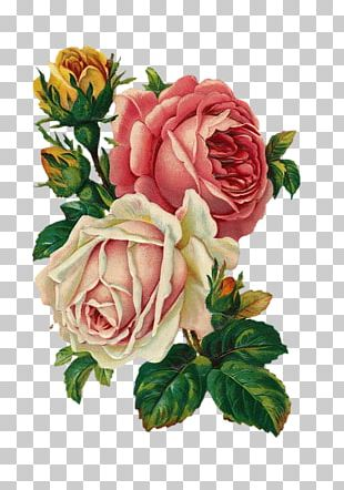 Vintage Roses: Beautiful Varieties For Home And Garden Flower Bouquet Antique PNG