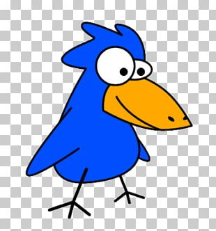 Bird Funny Animal PNG