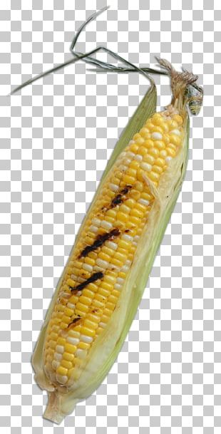 Corn On The Cob Insect Butterfly Commodity Maize PNG