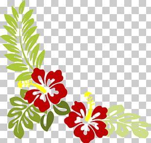 Shoeblackplant Flower Mallows Hawaiian Hibiscus PNG