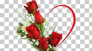 Desktop Rose Love Flower Stock Photography PNG