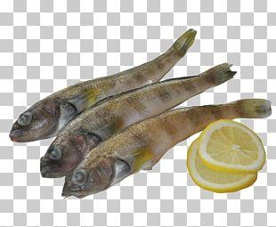 Fish Capelin PNG