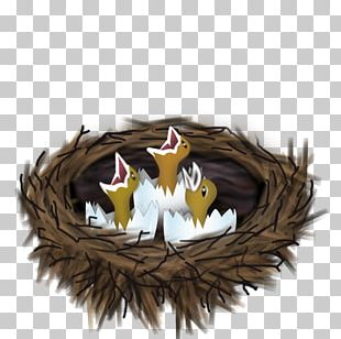 Bird Nest Drawing Cartoon PNG