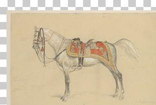 Stallion Mustang Bridle Rein Halter PNG