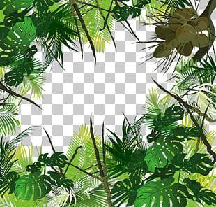 Tropical Forest Amazon Rainforest Jungle Tropics Tropical Rainforest PNG