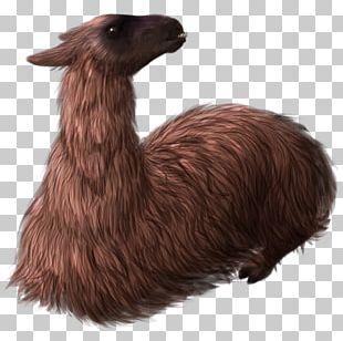 Llama Fur Terrestrial Animal Snout PNG