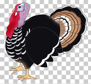 Narragansett Turkey Black Turkey Bird Drawing PNG