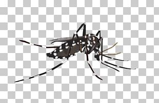 Yellow Fever Mosquito Insect Dengue PNG