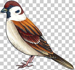 Bird Finch PNG