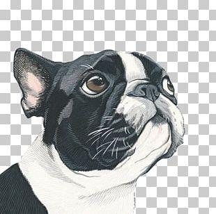 Dog Portrait Painting Art Illustration PNG