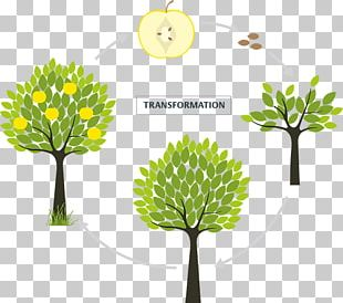 Branch Fruit Tree Flowering Plant PNG