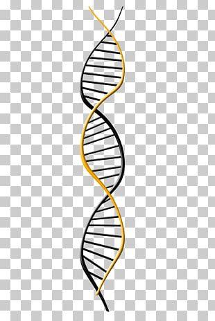 Genetics DNA Extraction Genome PNG
