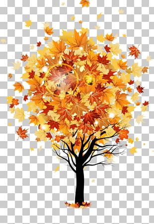 Tree Autumn Maple Stock Photography PNG