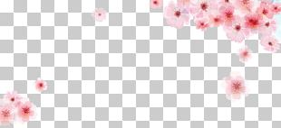 Pink Cherry Blossom Flower PNG