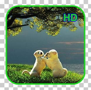 Desktop 4K Resolution 1080p Ultra-high-definition Television PNG