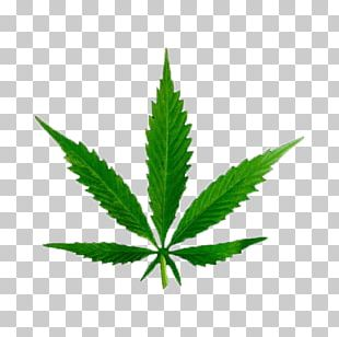 Medical Cannabis Tetrahydrocannabinol Cannabinoid Legality Of Cannabis PNG