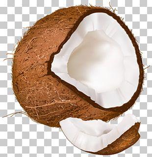 Open Coconut PNG