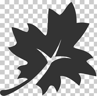 Japanese Maple Maple Leaf Computer Icons PNG