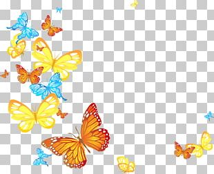 Butterfly Papillon Dog Transparency And Translucency PNG