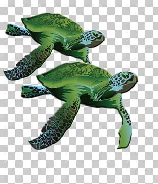 Loggerhead Sea Turtle La Quinta Inns & Suites Terrestrial Animal PNG