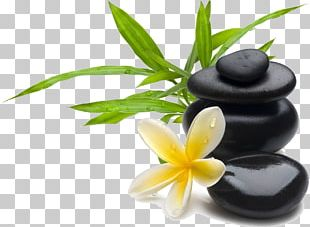 Massage Day Spa Beauty Parlour Facial PNG