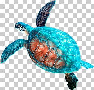 Loggerhead Sea Turtle Car Rental Hanauma Bay PNG