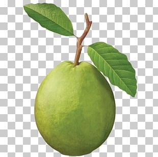 Common Guava Fruit Tree Tropical Fruit PNG