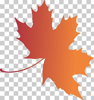 Woody Plant Maple Leaf Tree PNG