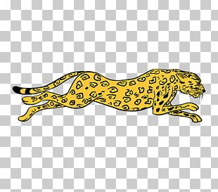 Cheetah Lion How To Draw Big Cats Drawing PNG