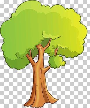 Tree Cartoon Drawing PNG
